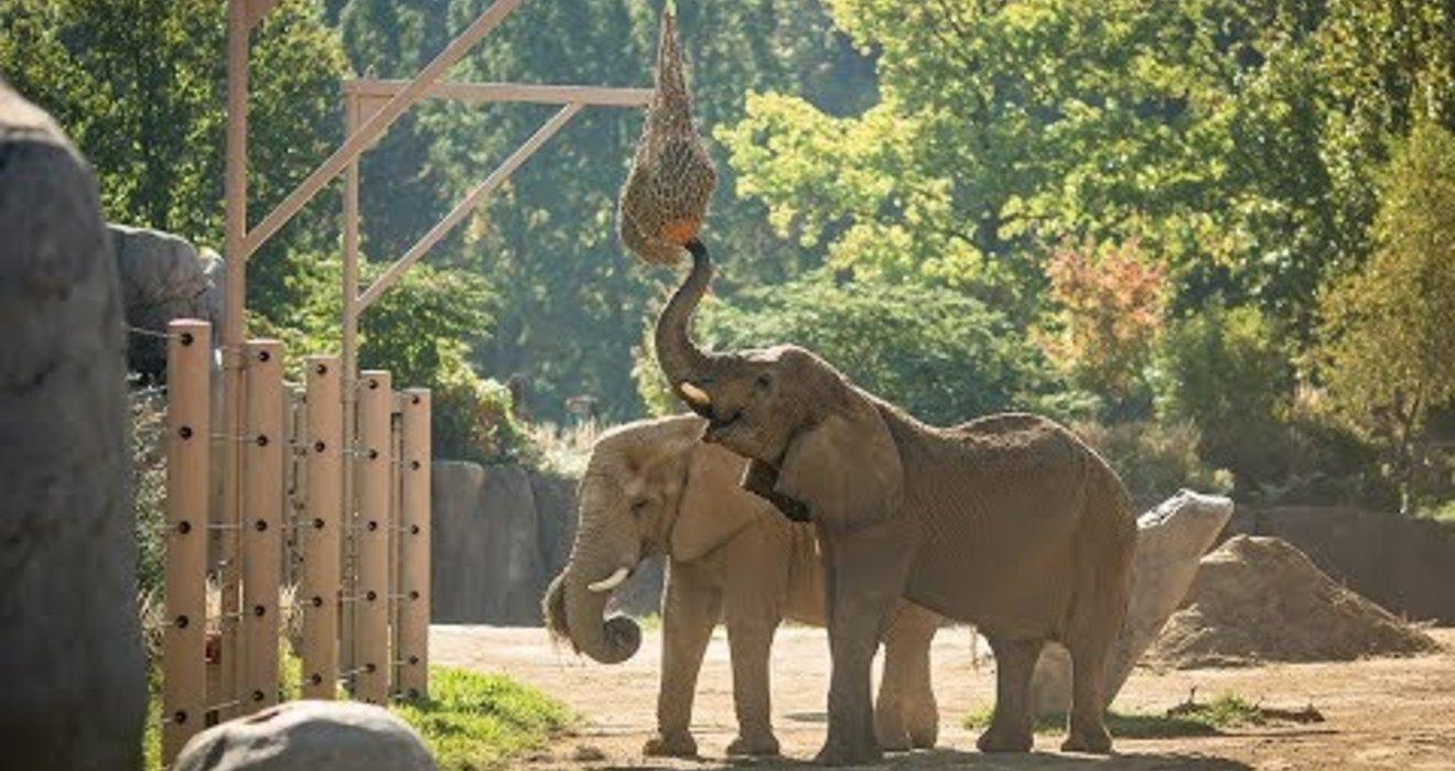 Do elephants eat