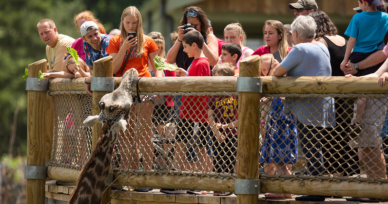 The Zoo's Ben Gogolick Giraffe Encounter allows guests to feed the Zoo's herd of giraffe.
