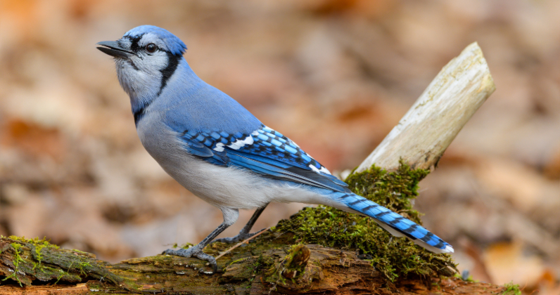 Citizen science with eBird| Cleveland Zoological Society | April 12